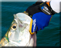 Tarpon Fishing Marathon, Florida
